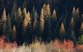 North Idaho Fall Hike of Mt. Chilco