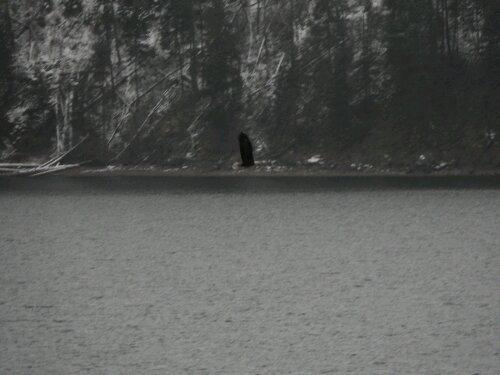 Flying Eagle in Coeur d'Alene, Idaho