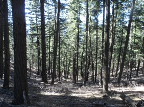 Switchbacks through the trees