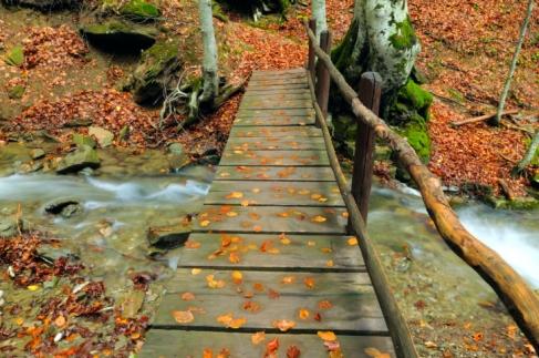 pic, fall colors in coeur d'alene, hiking in coeur d'alene